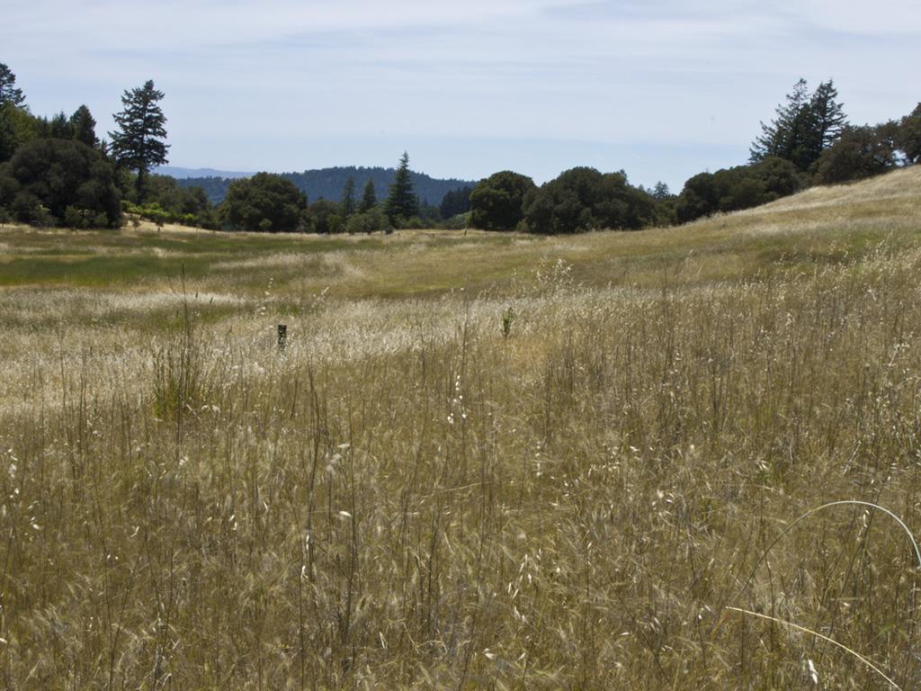 Rill Landscape5-crop